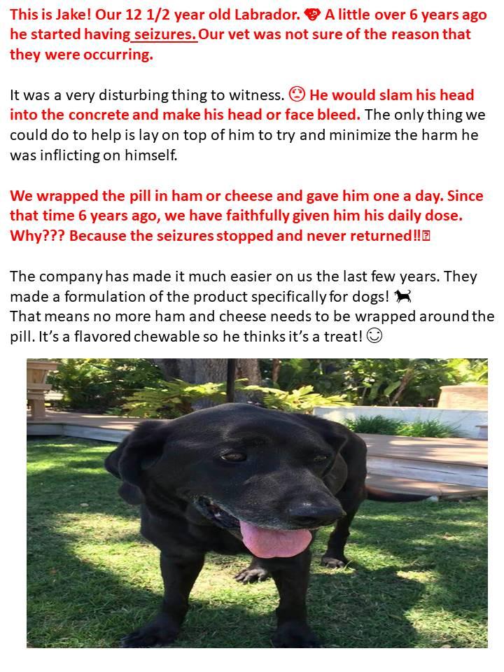 Dog Seizures